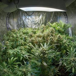 grow pot