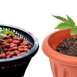 Choosing Between Soil Or Hydroponic Growing For Medical Marijuana