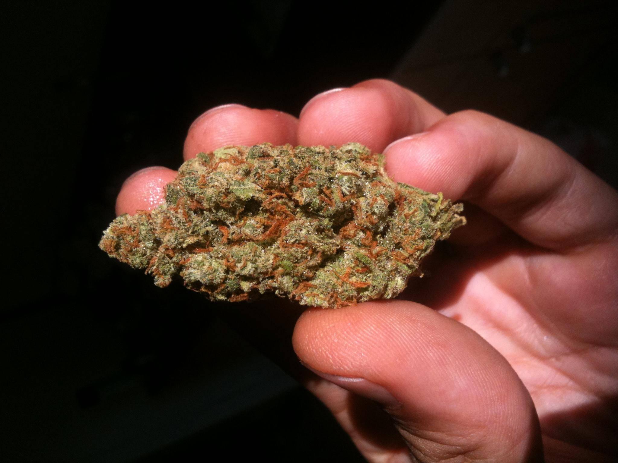 Marijuana strain - Super Jack