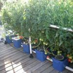 Hydroponic Systems Take A Step Forward With The Under Current System