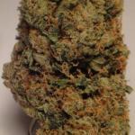Medicinal Cannabis Strain Review – XXX OG